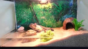 Halloween Hermit Crab Care by 10 Gallon Red Clawed Crab Tank Update Youtube