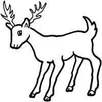 Deer Coloring Pages Surfnetkids