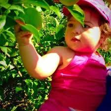 Best Pumpkin Apple Picking Long Island Ny by Best 25 Apple Picking Long Island Ideas On Pinterest Apple
