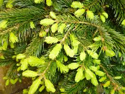Longest Lasting Christmas Tree Uk by Cabi Blogs Hand Picked And Carefully Sorted December 2013