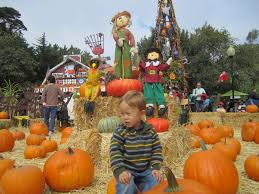 Clancy Pumpkin Patch Sf by The Kos Pumpkin Patch 1 Lemos Farm