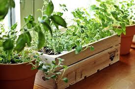 so legst du einen kräutergarten in der küche an fashion