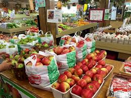 Apple Pumpkin Picking Syracuse Ny by At Ontario Orchards You Can Find Your Pick Of More Than Apples Waer
