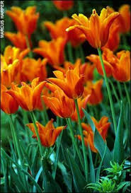 plant and store bulbs in fall football season starts bulbs and