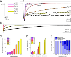 100 Ph Of 1 Deactivation Kinetics Of Acidsensing Ion Channel A Are