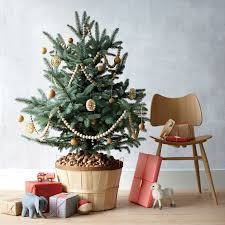 Sugar Or Aspirin For Christmas Tree by 5 Tips To Keeping Your Christmas Tree Fresh Through December