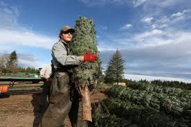Ge Franklin Fraser Fir Christmas Tree by Christmas Tree Prices Expected To Rise Amid Shortages The Columbian