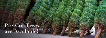 Fraser Christmas Tree Cutting by Brookside Christmas Tree Farm Lehigh Valley Poconos Pa Area