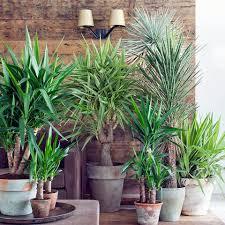 pflanzen im schlafzimmer gesund oder schädlich mein