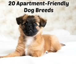Non Shedding Small Dog Breeds List by Condo Loving Canines 20 Of The Best Dog Breeds For Apartments