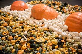 Tucson Pumpkin Patch by Center U0027s Pumpkin Patch Northpark Center Dallas From 14 To 31