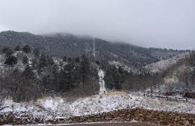 Christmas Tree Cutting Permits Colorado Springs by Dana Cronin Krcc