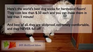 dog socks for hardwood floors get dog booties or shoes for