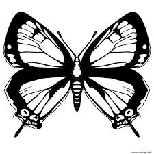 Coloriage Papillon 232 Dessin