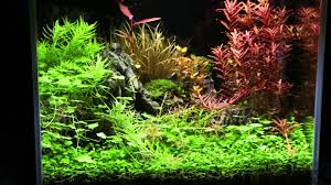 Flexi Mini Scape Set- Time Lapse - YouTube Aquascaping Artist Oliver Knott Scapingaquarium Pinterest Schwimmende Stein Steine Im Aquarium By Knott Youtube Aquascapi Sequa Interzoo 2012 Feat Chris Lukhaup Live Part 3 The Island Aquascape Step Aquariology With At The Koelle Zoo Heidelberg New Project Photo Editor Online And Editor Made Teil 1 Inspiration Tips Tricks Love Aquascaping Octopus Aquarium Via Aquac1ubnet