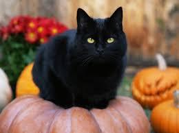 Pumpkin House Kenova Wv Times by Halloween Jackolanterns