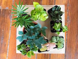 Good Plants For Bathrooms Nz by How To Make A Terrarium Realestate Com Au