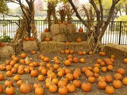 Pumpkin Patch Near Santa Clarita Ca by Chicago Area Pumpkin Patches 40 To Choose From Chicago Tribune