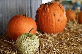 Best Pumpkin Patches In Cincinnati by Kinman Farms U2013 Family Friendly Fun