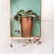 hängende zimmerpflanzen pflanzen spengler