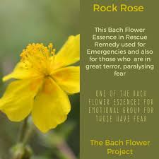499 best Healing with Bach Flower Essences images on Pinterest