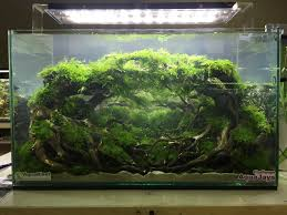 Stan Chung - Stunning Aquascapes In The Best Live Scaping ... Aquascaping Aquarium Ideas From Aquatics Live 2012 Part 2 Youtube Aquascape Wallpaper Google Search Scapingaquarium Modern Design With Aquascape Style For New Interior Aqurio Habitats Pinterest Aquariums Ideas And My First Iwagumi Layout Pleco Tank Desert Dry Creek Ada 60p Lowtech Lantre Du Combattant De 12 Litres Ohkostone Nature Cool Fish Tanks Sea Animals Very Cool Diy Garden Fish Aquascapes Gallery Tropical Planted Aquarium Looks Like A Dirt Road With Flying In The The Mdbending Nano Of John Pini