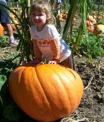 Mission Valley Pumpkin Patch by Best Pumpkin Patches And Farms In San Diego