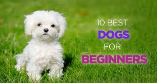 best dogs for beginners and first time dog owners
