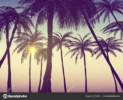 Summer California Tumblr Backgrounds Set Palms Sky Sunset Placard Stock Vector