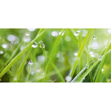 westag getalit glasrückwand wandart vitre 120 x 58 5 cm grass