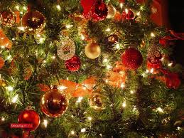 Best Live Christmas Trees To Buy by Collection Houses Christmas Decorated Pictures Patiofurn Home
