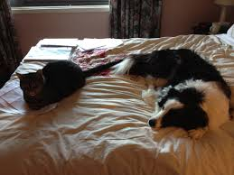 dog and cat in bed to her Sharing the Bed Pinterest