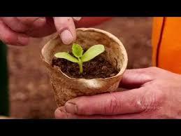 Terraria Magical Pumpkin Seed by Plant Pumpkin Seeds Terraria Pumpkin Harvesting