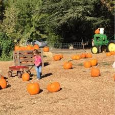 Best Pumpkin Patch Near Roseville Ca by Zittel Farms 17 Photos U0026 20 Reviews Farmers Market 6781 Oak