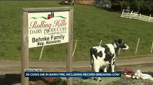 Barn Fire Kills 30 Cows Including Record-setting Cow Gigi - WISC 111 Best Watchtower Farms Fire Dept Images On Pinterest Clay Township Dairy Barn Fire Causes 350k Damage Local News Hay Burns At Butler County Dairy Crime And Courts Roger Johnson Farm Comes Tough Time For North Bay Milk Industry Cow Destroyed By Massive In Beekmantown Probe Of That Destroyed Historic Barn At Uconn Underway Multiple Crews Battle Hillside Fox17 Updated In Tecumseh Windsoritedotca Loader Commodity Huaxia Farm Youtube Korona The Daily Gazette Destroys Milking Parlor Of Benton