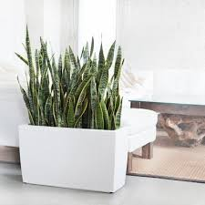Good Plants For Bathroom by Best Plants For Bathrooms