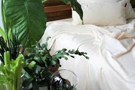 pflanzen im schlafzimmer edel ehrlich bio ia io