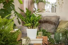 pflanzen in hydrokultur dürfen aus erde stammen olerum