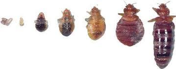 Carroll County Iowa Bed Bugs