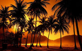 1920x1080 Free Desktop Beach Palm Tree Wallpapers