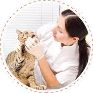 ark animal hospital veterinarian wyomissing pa