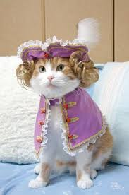 costume for cat how to find a costume for your cat kittentoob
