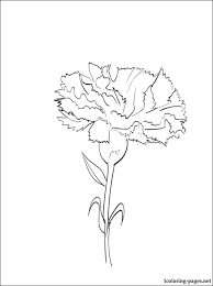 Coloring Page Carnation
