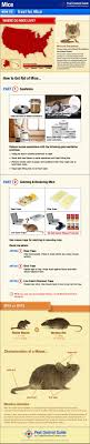 How To Get Rid Of Mice - Mouse Control & Treatment Guide Mice How To Identity And Get Rid Of In The Garden Home Rats Guaranteed 4 Easy Steps Youtube Does Peppermint Oil Repel Yes Best 25 Getting Rid Rats Ideas On Pinterest 8 Questions Answers About Deer Hantavirus Mouse Control To Of In The Keep Away From Bird Feeders Walls 2 Quick Ways That Work Get Rid Of Rats Using This 3 Home Methods Naturally Dangers Rat Poison Dr Axe Out Your Without Killing Them