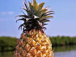 ananas obst bio gesund saftig natürlich natur das