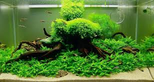 Aquascape Nature Aquarium And Wiki Appartment Aquascape Waterfall ... Awesome Aquascaping Gallery Iiac European Aquascape Channel Aquascapes Homedesignpicturewin Aquascaping Tutorial Aqurios Para Decorao Pinterest Big Tutorial Guide Continuity By James Findley The Indonesia Green Machine Ada Aquarium Acuarios Aquariums Best Of Aquascapes Fabuluxedecor Natural Iwagumi Scottish Grass Size 40x25h Lab Undergrowth Wood Tank 130l Aquadesign