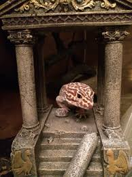 Do Baby Leopard Geckos Shed by How Do I Know If My Leopard Gecko Is Fat Geckos Leopards And