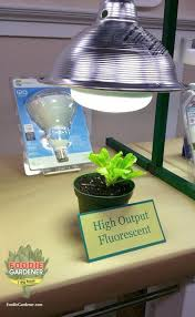 sun l for indoor plants high output compact fluorescent light