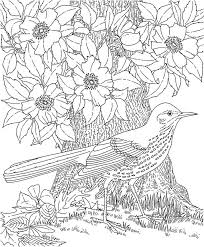Bird Robin Free Adult Printable Coloring Pages Flowers
