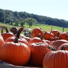Best Pumpkin Patch Madison Wi by Leatherberry Acres U2013 Sunflower Maze Corn Maze And Pumpkin Patch